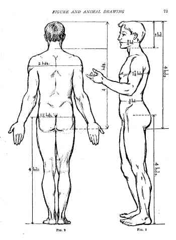 proportions of body. Other dimensions of the ody